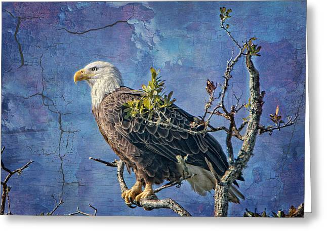 Eagles In Storms. Bald Eagles Greeting Cards - Eagle in the Eye of the Storm Greeting Card by Bonnie Barry