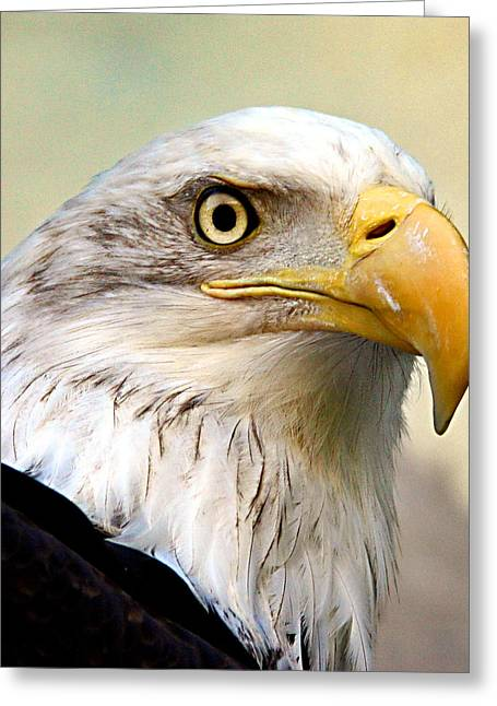 Jean Noren Greeting Cards - Eagle Portrait Greeting Card by Jean Noren