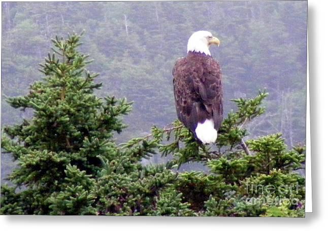 Best Sellers -  - Surveying Greeting Cards - Eagle Looking to the Right Greeting Card by Barbara Griffin