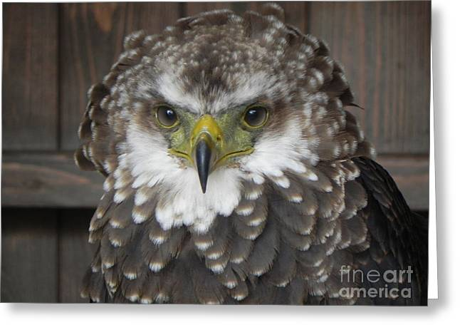 Castle. Birds Greeting Cards - Eagle Owl Greeting Card by Sandy Owens