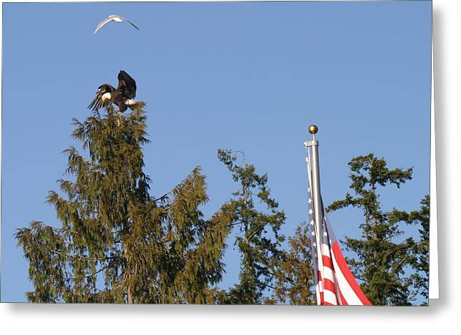 Eagle Rallies Round The Flagpole Greeting Card by Kym Backland