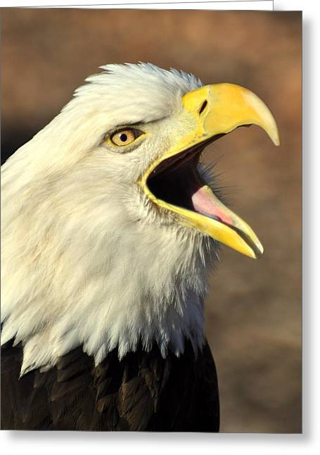 Marty Koch Greeting Cards - Eagle Squawk Greeting Card by Marty Koch