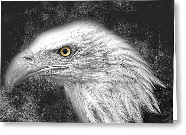 Edmonton Greeting Cards - Eagle two Greeting Card by Jerry Cordeiro