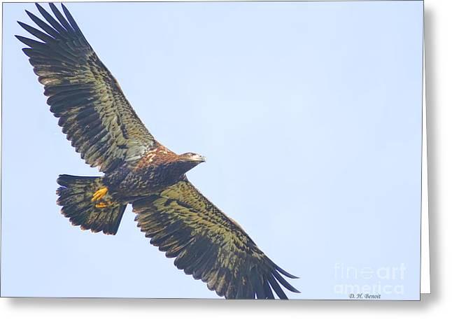 Eaglet Greeting Cards - Eaglet 2012 Greeting Card by Deborah Benoit