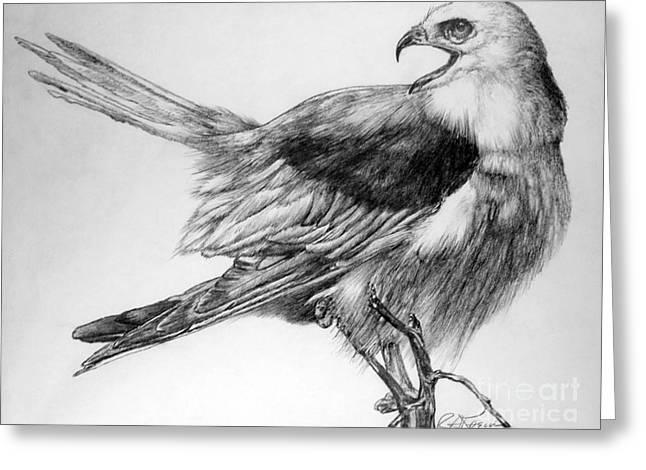 Kaelin Drawings Greeting Cards - Eaglet Greeting Card by Roy Kaelin