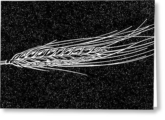 Ear Of Barley, Woodcut Greeting Card by Gary Hincks