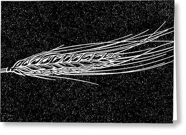 Linocut Greeting Cards - Ear Of Barley, Woodcut Greeting Card by Gary Hincks