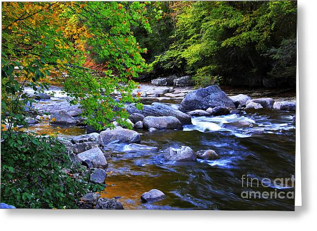 Rushing Stream Greeting Cards - Early Autumn along Williams River Greeting Card by Thomas R Fletcher
