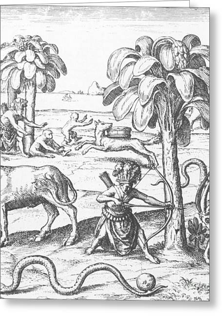 1500s Greeting Cards - Early Exploration Greeting Card by Science Source