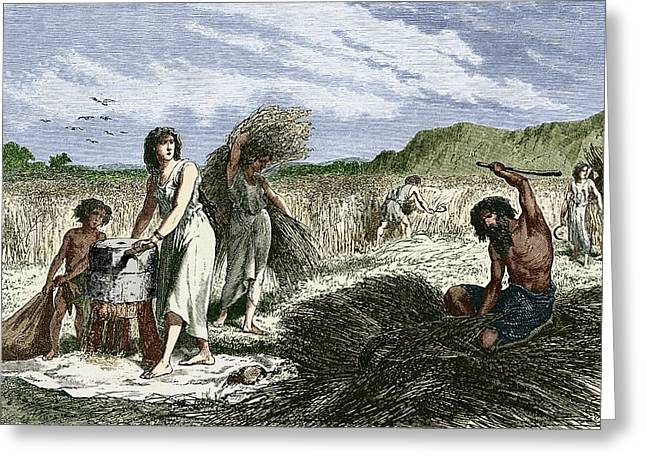 European work Photographs Greeting Cards - Early Humans Harvesting Crops Greeting Card by Sheila Terry