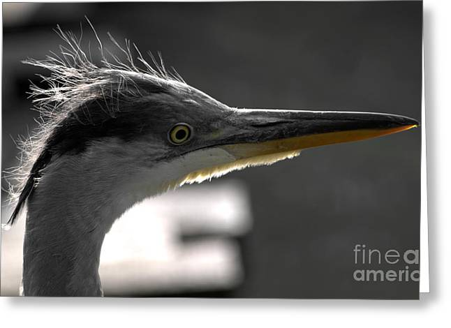 Gray Heron Greeting Cards - Early in the morning Greeting Card by Andreas Berheide