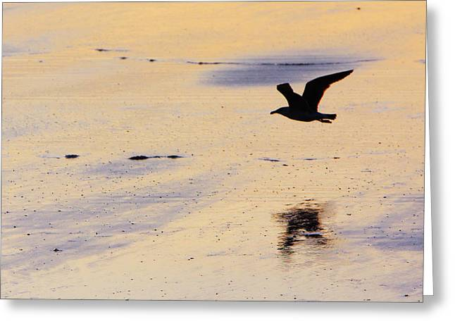 Maine Beach Greeting Cards - Early Morning Flight Greeting Card by Rick Berk