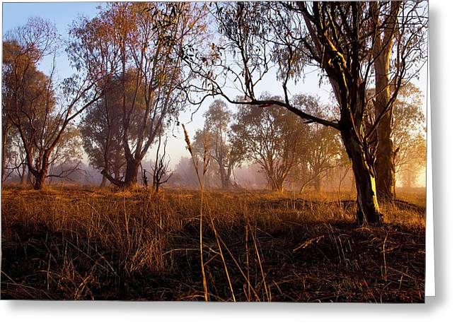 Alcoa Greeting Cards - Early Morning Glow Greeting Card by Heather Thorning