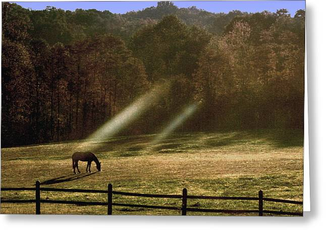 Indiana Autumn Greeting Cards - Early Morning Grazing Greeting Card by Diane Merkle