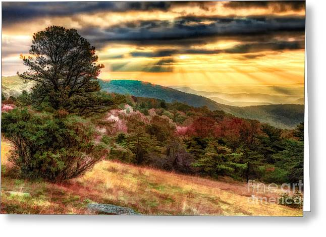 Pasture Framed Prints Greeting Cards - Early Morning Light Greeting Card by Dan Carmichael