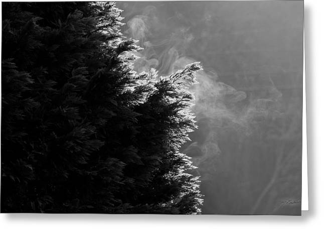 Pine-mist Greeting Cards - Early Morning Magic Greeting Card by Melissa Wyatt