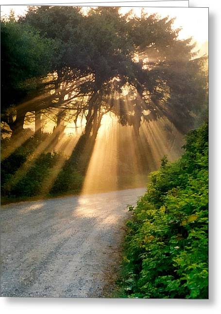 Lawns Fields Greeting Cards - Early Morning Sunlight Greeting Card by Michelle Calkins