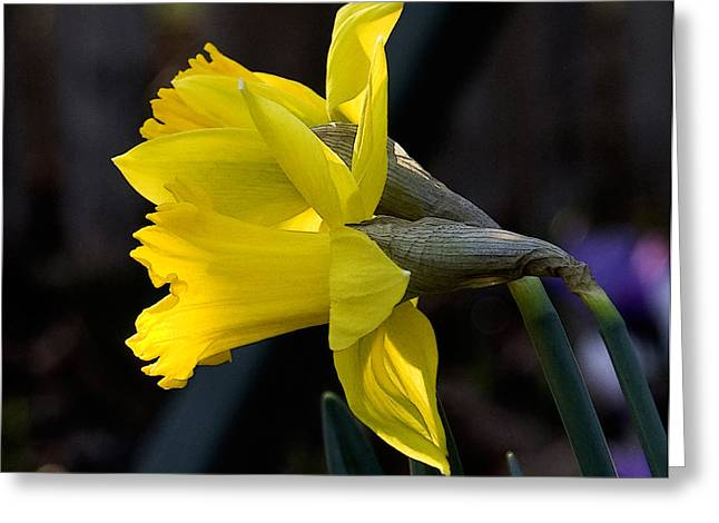 Early Spring Greeting Card by Michael Friedman
