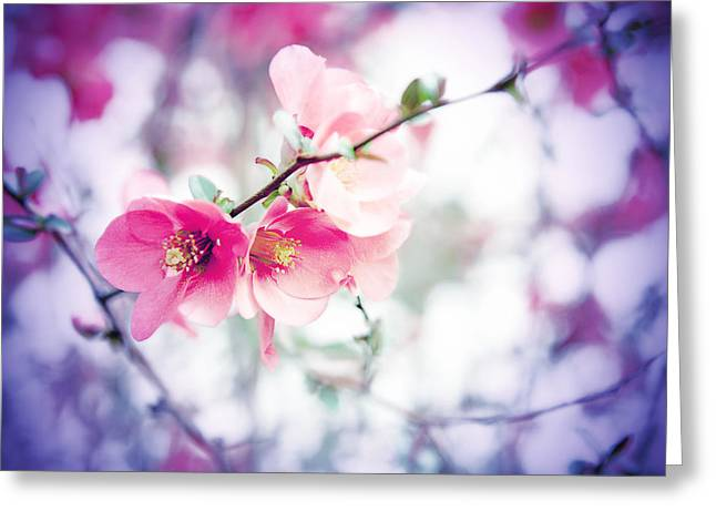Pink Flower Branch Greeting Cards - Early Spring Greeting Card by Toni Hopper