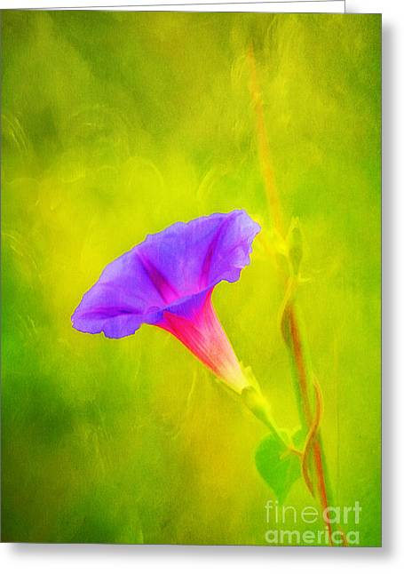 Early To Rise Greeting Card by Darren Fisher