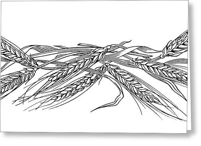 Linocut Greeting Cards - Ears Of Barley, Woodcut Greeting Card by Gary Hincks