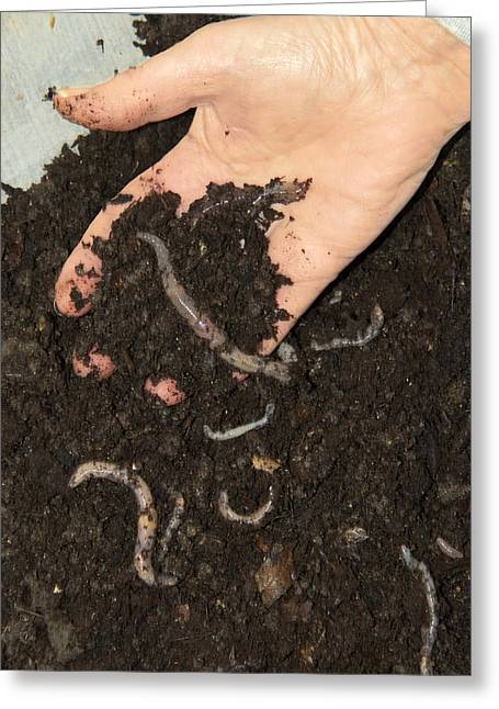 Nightcrawler Greeting Cards - Earthworms In Soil Greeting Card by Sheila Terry
