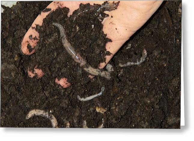 Earthworms In Soil Greeting Card by Sheila Terry