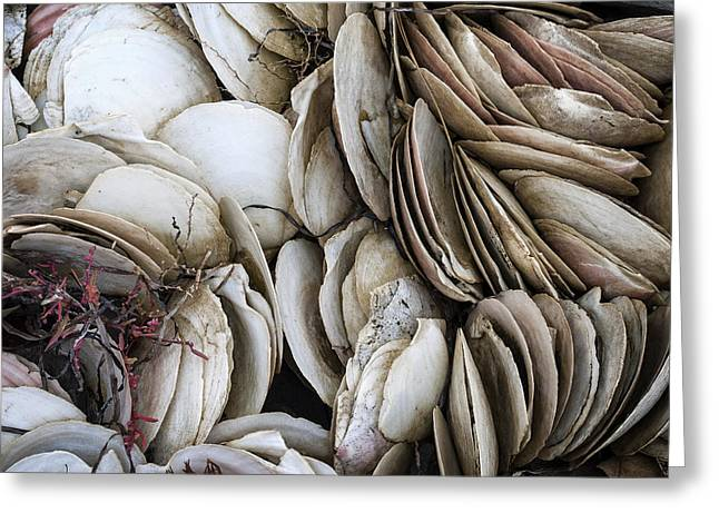 Shell Texture Greeting Cards - East Coast Textures 2 Greeting Card by John Burnett