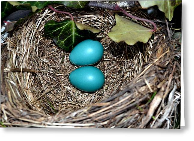 Springy Greeting Cards - Easter Eggs Greeting Card by Michelle Calkins
