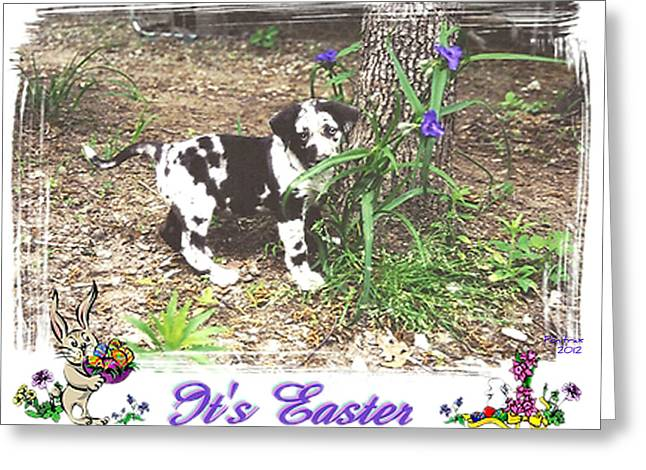 Drug Sniffing Dog Greeting Cards - Easter Greeting Card by Poni Trax