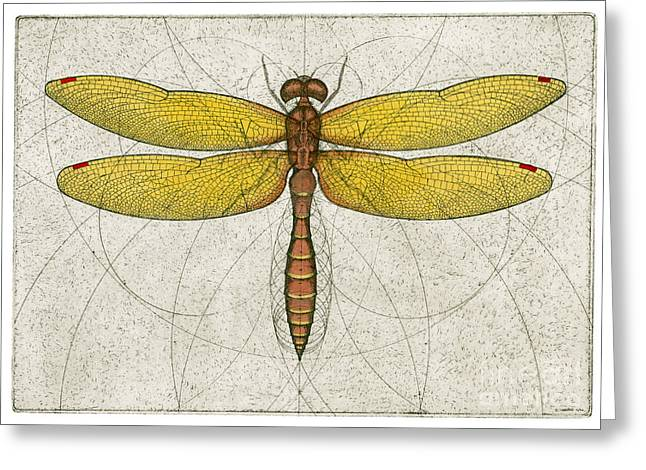 Insect Mixed Media Greeting Cards - Eastern Amberwing Dragonfly Greeting Card by Charles Harden