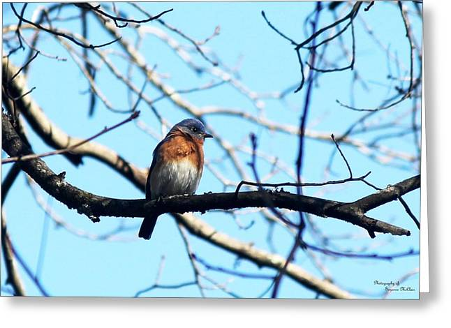 Bluebird Posters Greeting Cards - Eastern Bluebird 5766-I Greeting Card by Suzanne  McClain