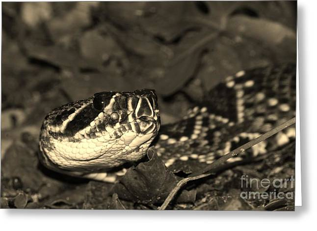 Snake Flag Greeting Cards - Eastern Diamondback Close Up in Sepia Greeting Card by Lynda Dawson-Youngclaus