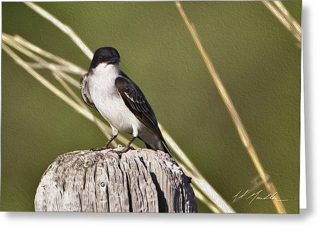 Eastern Kingbird Greeting Cards - Eastern Kingbird Greeting Card by Al  Mueller
