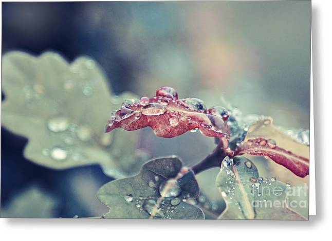 Rain Drop Greeting Cards - Eau de Vie - s04a Greeting Card by Variance Collections
