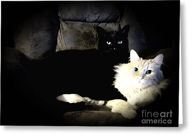 Siamese Cat Greeting Card Greeting Cards - Ebony and Ivory Greeting Card by Denise Oldridge