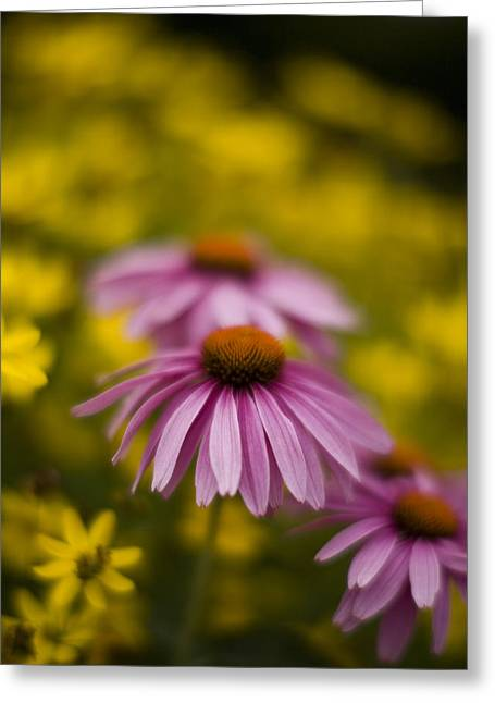 Echinacea Dreamy Greeting Card by Mike Reid