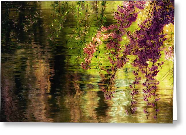 Cherry Blossom Tree Greeting Cards - Echoes of Monet - Cherry Blossoms Over a Pond - Brooklyn Botanic Garden Greeting Card by Vivienne Gucwa