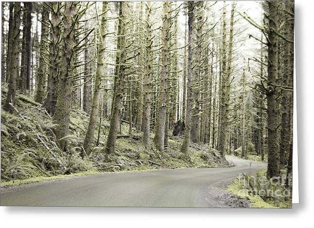Moss Green Greeting Cards - Ecola Forest Road Greeting Card by Andrea Hazel Ihlefeld