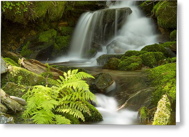 North Idaho Greeting Cards - Eden Greeting Card by Idaho Scenic Images Linda Lantzy