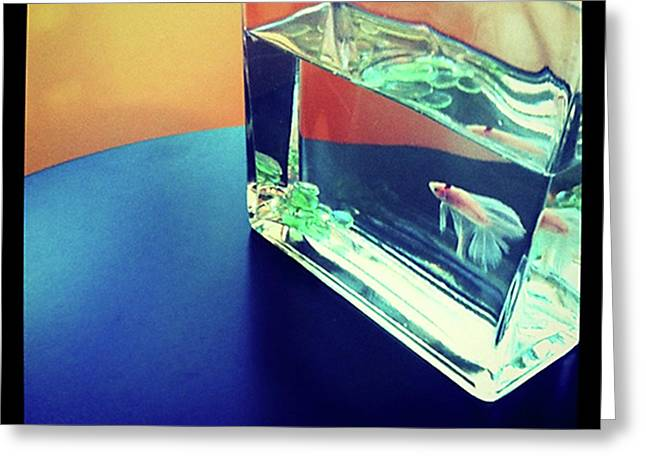 Recently Sold -  - Betta Greeting Cards - Edgar II Greeting Card by Kevin Bergen