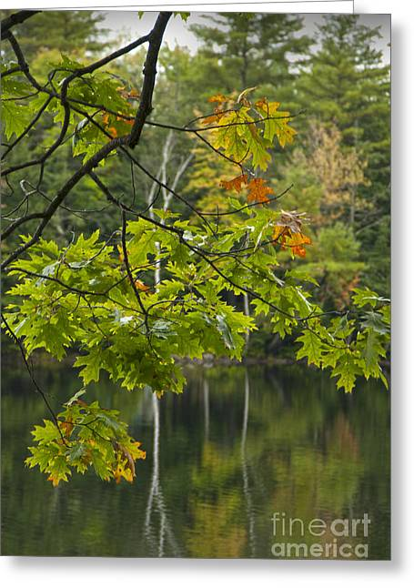 Maine Greeting Cards - Edge of Autumn Greeting Card by Alana Ranney