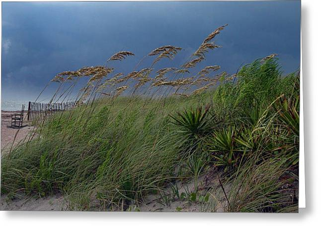 Rocking Chairs Greeting Cards - Edisto Oat Fields Greeting Card by Skip Willits
