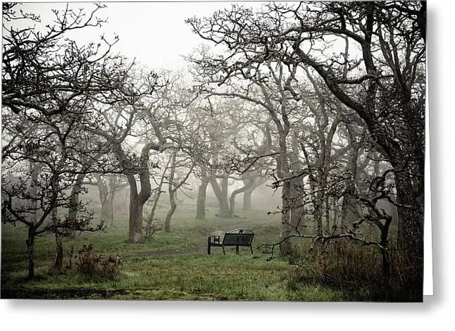 Bare Trees Greeting Cards - Eerie Fog Shrouded Park Greeting Card by Helene Cyr