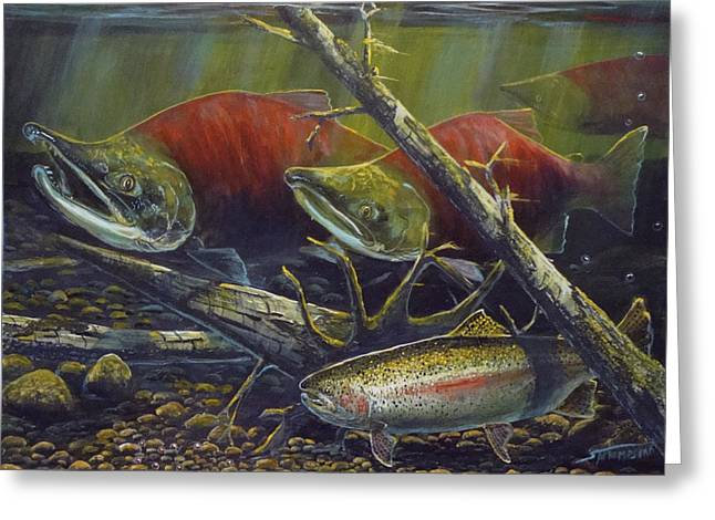 Rainbow Trout Greeting Cards - Egg Thief Greeting Card by Scott Thompson