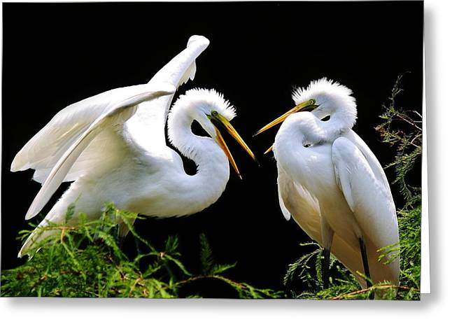 Egret Babies Greeting Card by Paulette Thomas