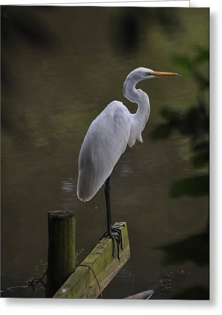 Egret Perch Dobbins Mill Pond - Egfbc3070a Greeting Card by Paul Lyndon Phillips