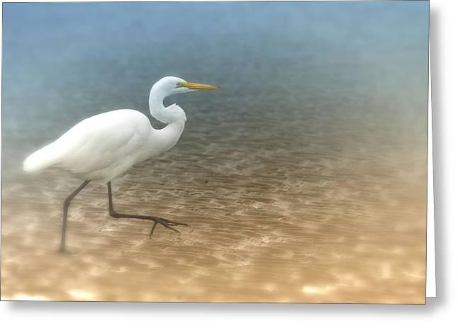 Egret Stroll Greeting Card by Karol Livote