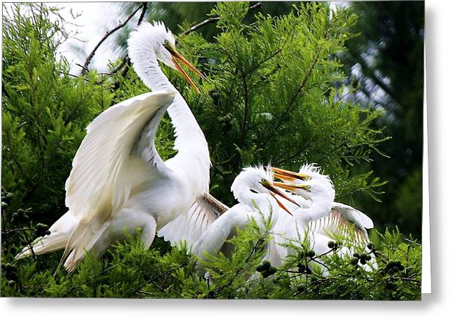 Egret With Babies Greeting Card by Paulette Thomas