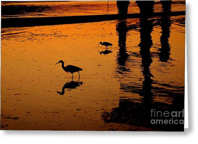 Floating Torii Greeting Cards - Egrets at Dusk Greeting Card by Dean Harte